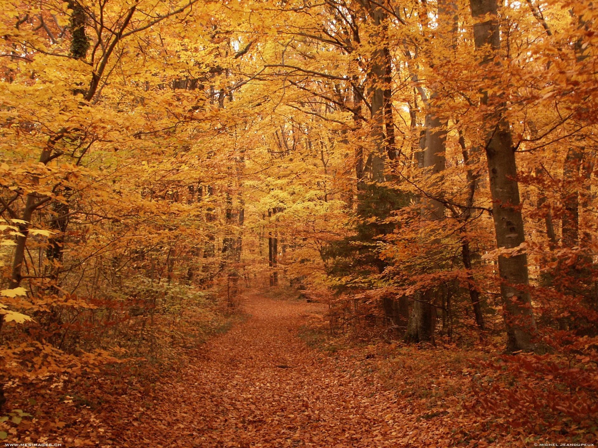 automne13.jpg